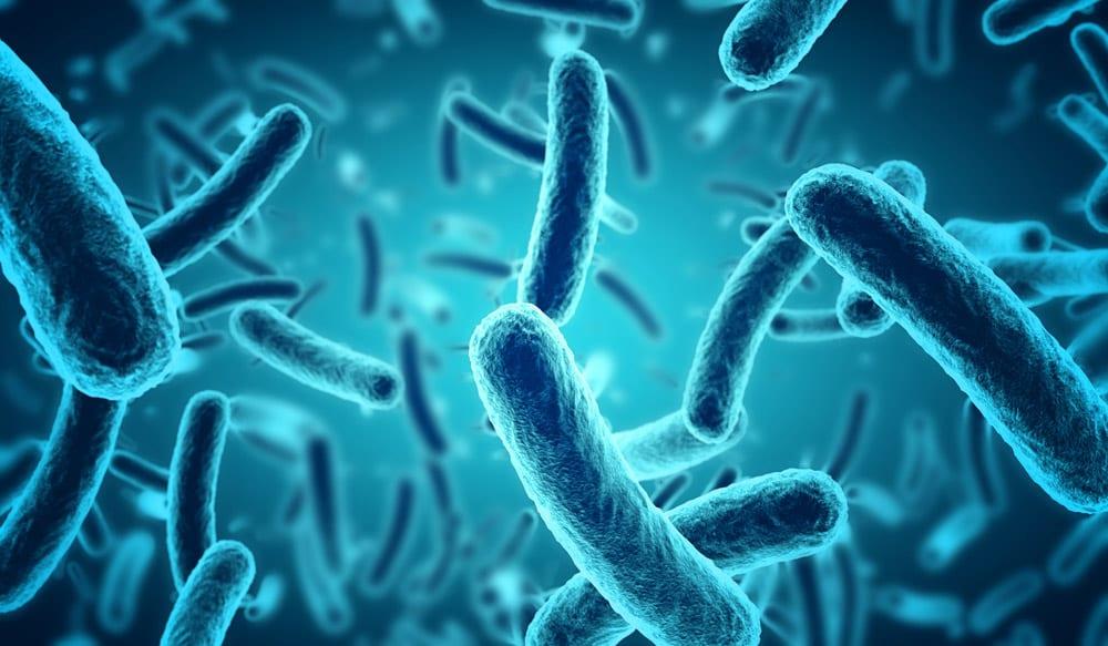דיאטת חיידקים