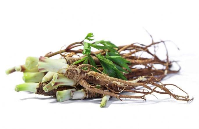 אנג'ליקה סינית   Angelica sinensis – אלטמן בריאות
